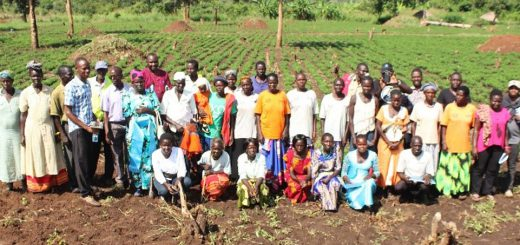 Loyokwo-Groundnut-Seed-Farmer-Group